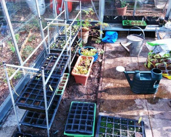 cgn garden 28-03-14 (2)