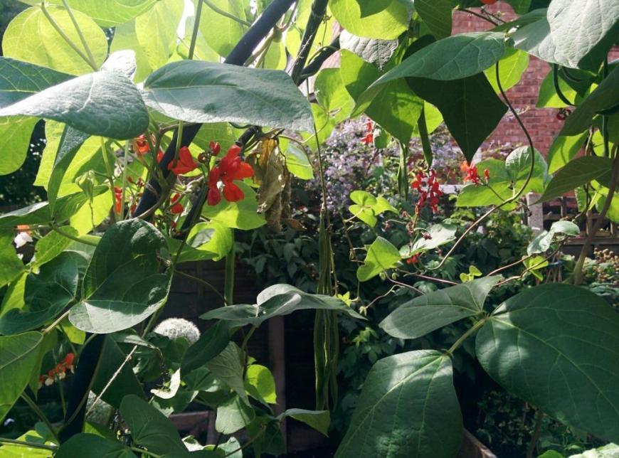 cgn garden 22 July (1)
