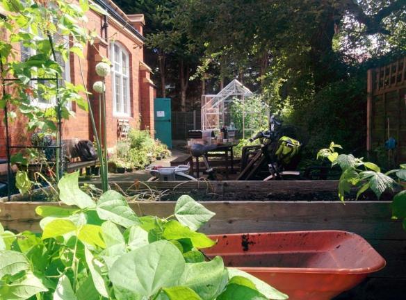 cgn garden 22 July (5)
