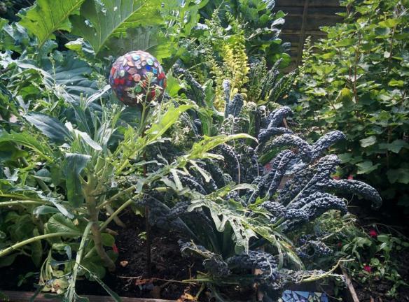 cgn garden 22 July (6)