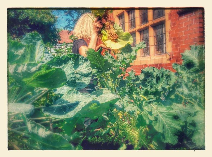 cgn garden 22 July (8)