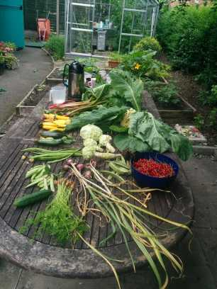redcurrants, cauliflower, garlic, rhubar, corgettes, baby carrots in this weeks haul