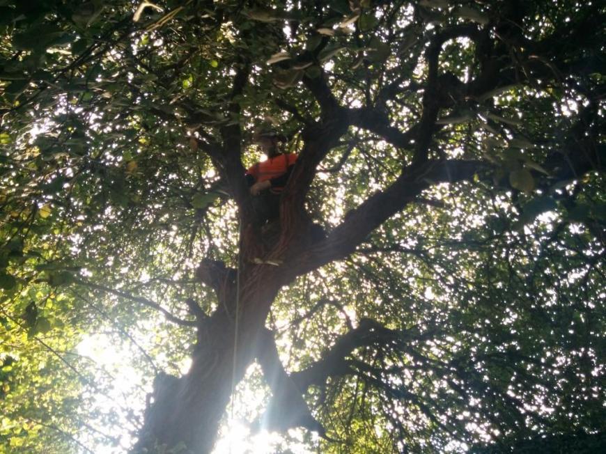 tree-felling-02