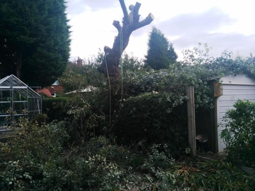 tree-felling-04