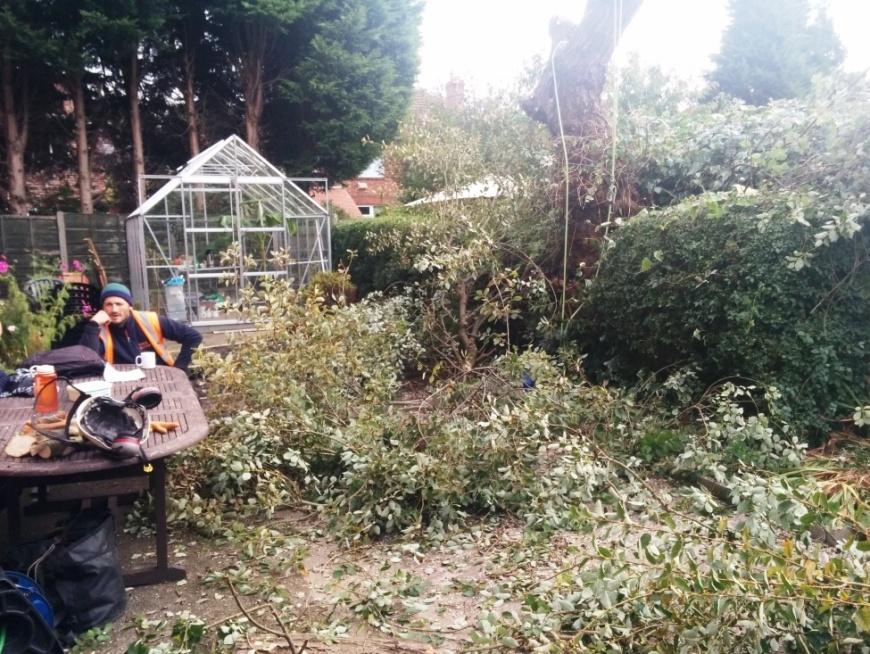 tree-felling-05