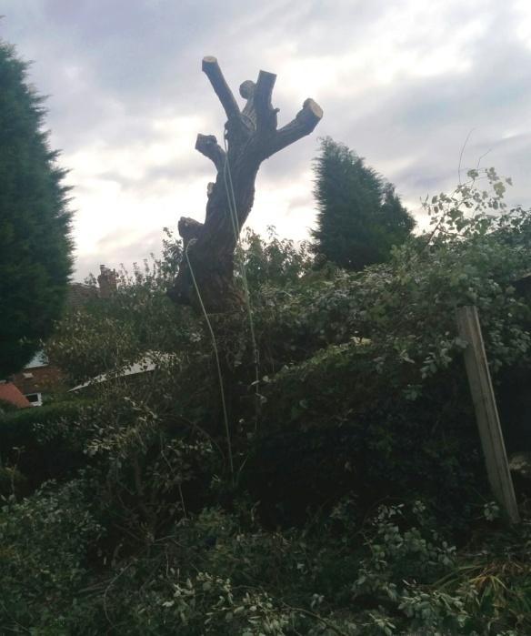 tree-felling-06